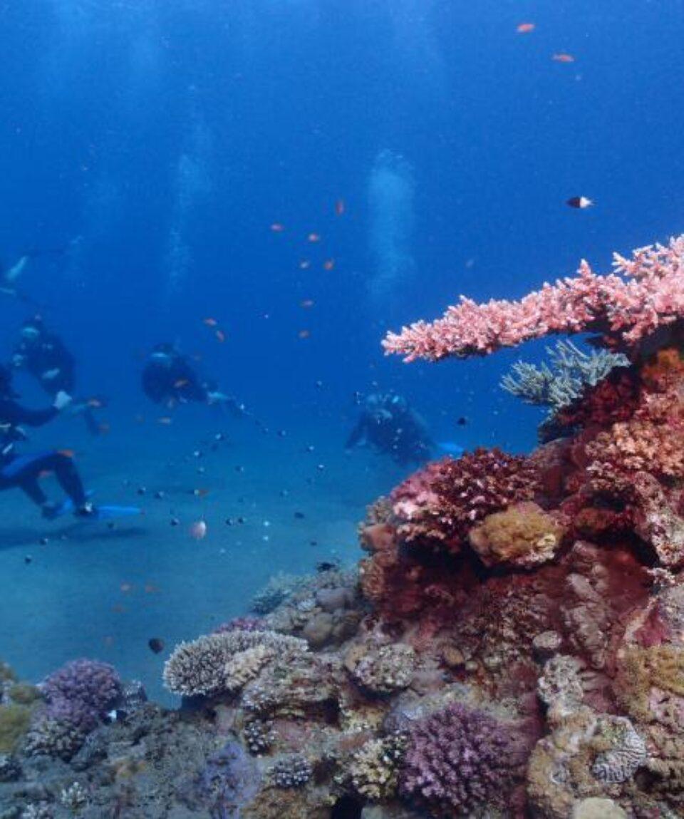 Buceo Mar rojo corales