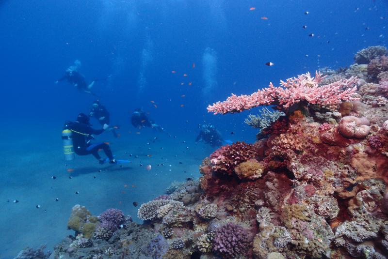 Buceo en el Mar Rojo corales