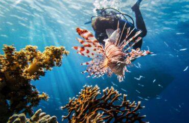 Buceo Mar rojo buceo pez