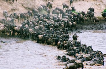 Kenya  Migración