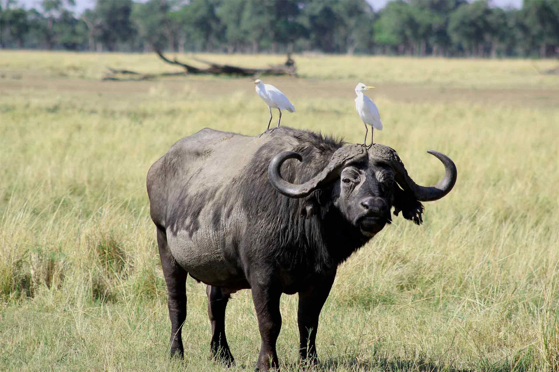 Safari Kenia fin de año