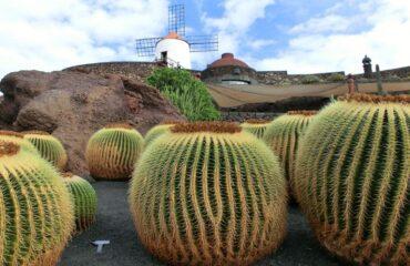 lanzarote-cactus-bolas