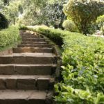 Jardín Botánico de Paradeniya, Kandy Oferta viaje a Kandy.