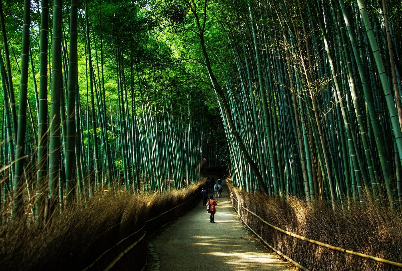 Bosque natural de Bambú en Kyoto. Oferta viaje en Japón.