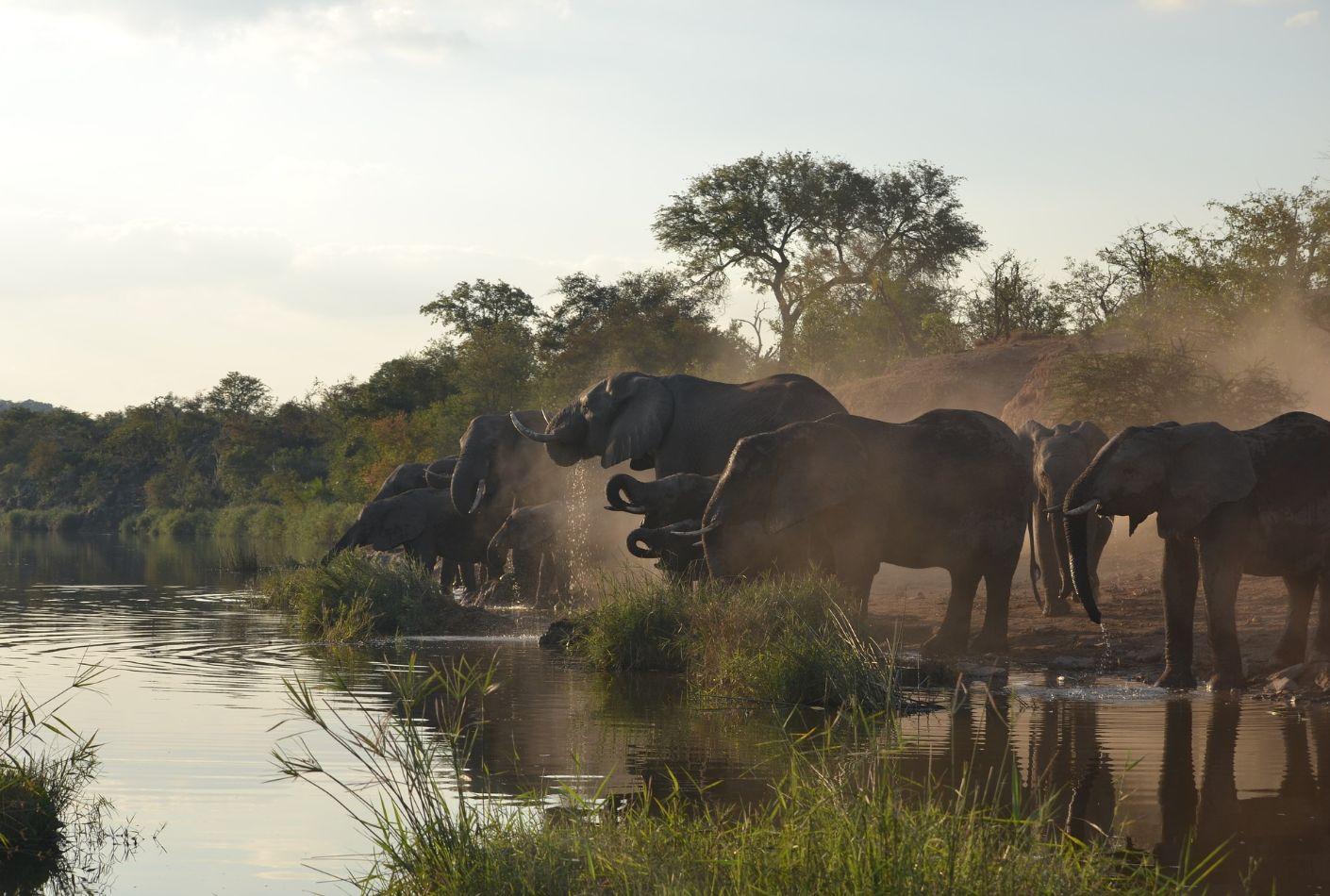 Elefantes en el Parque Kruger. Gran oferta en el parque Kruger.