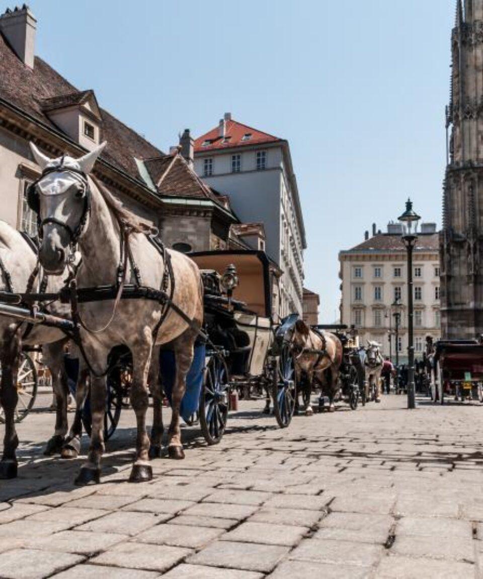 Viena-carro caballos
