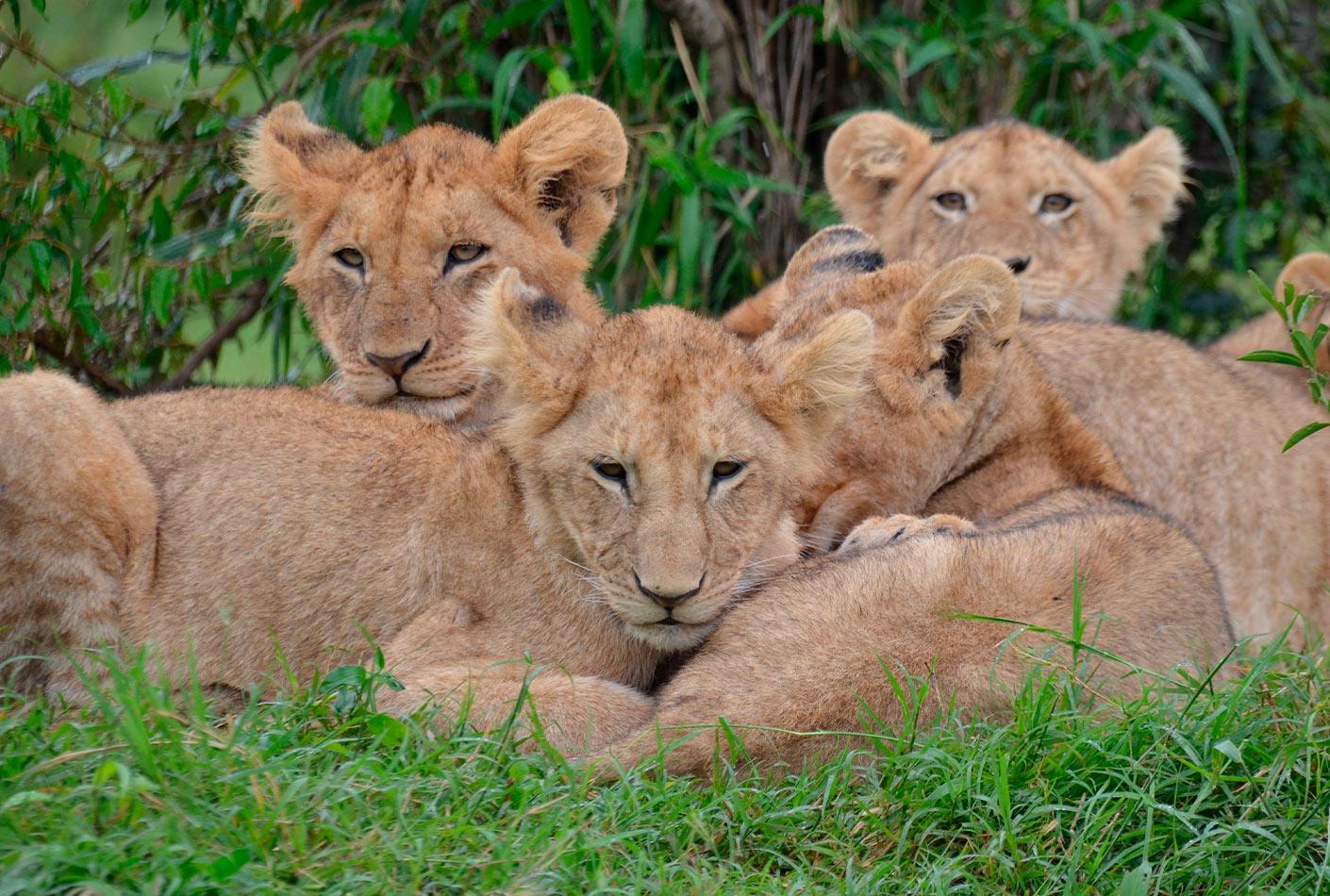 Kenia safari privado en familia